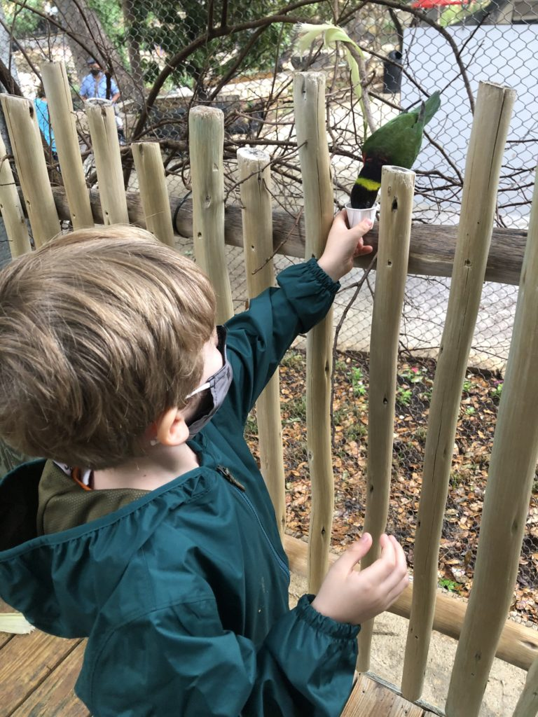 photo of kiddo with a lorikeet bird on a fence feeding from handheld nectar cups.