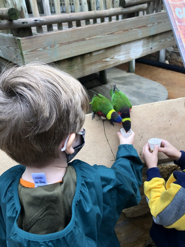 photo of kiddo with 2 lorikeet birds feeding from handheld nectar cups.